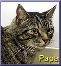 Picture of our new cat, named Papa in the cattery