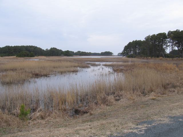 Pond on Assateague Island