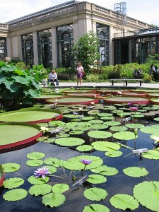 Lily pads at Longwood Gardens