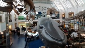 Extraordinarily large mammals at the British Natural History Museum
